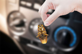 Bed Bug Control in Sunshine Coast QLD - How Bed Pests Move to Your Car
